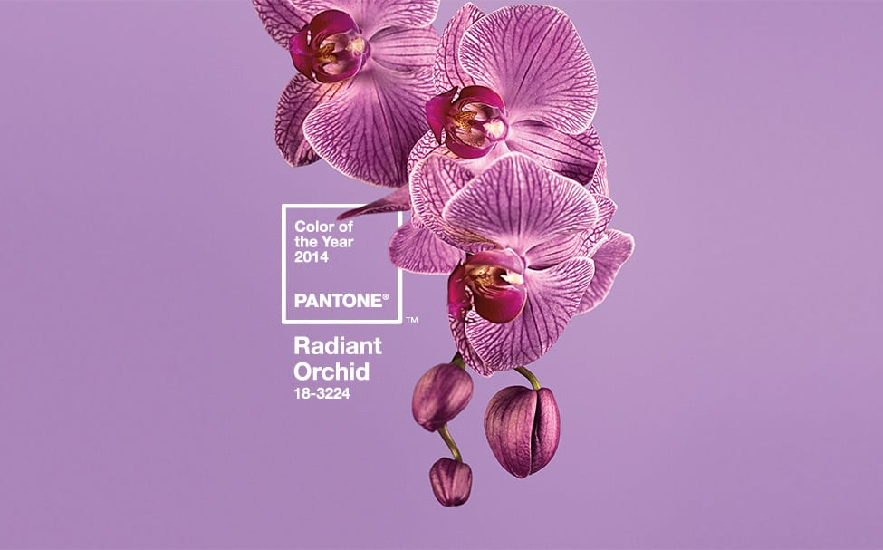 Pantone Radiant Orchid Living Room | Cabana Home