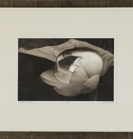 unfolding lotus flower 8x12 with frame